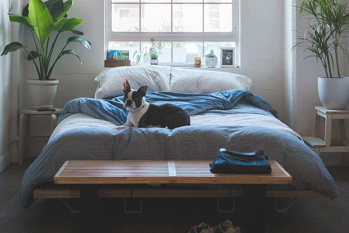 A Review of Top 3 Mattresses from Sofamania – Reviews, Price, Specs